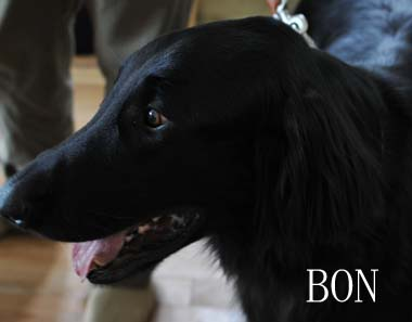 Bon_2