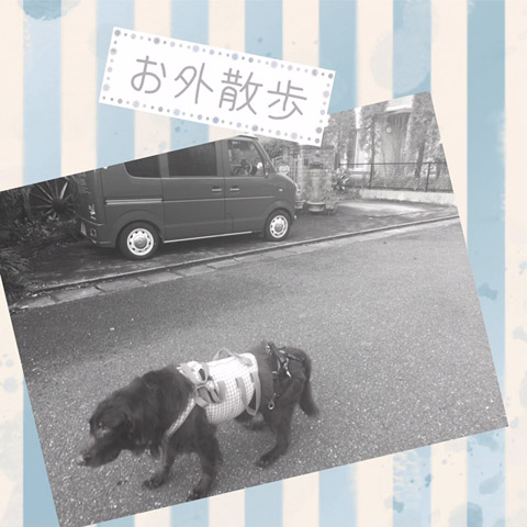 Cameran_collage_2015_11_13