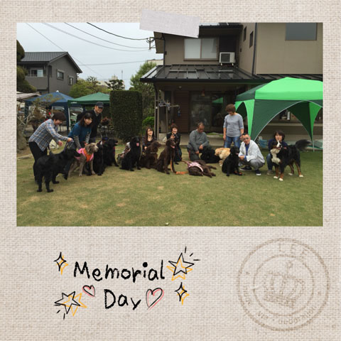 Cameran_collage_2016_04_034