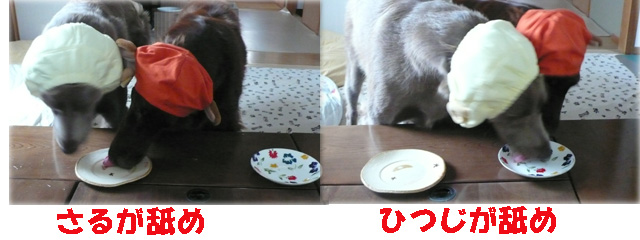 Photo_244