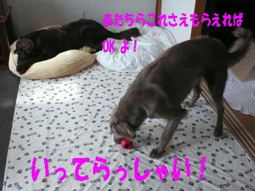 Photo_248
